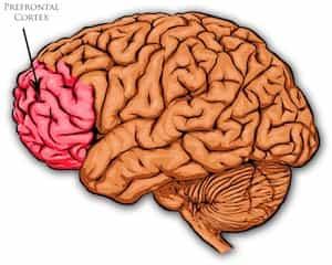 Scan Of Brain Cortex